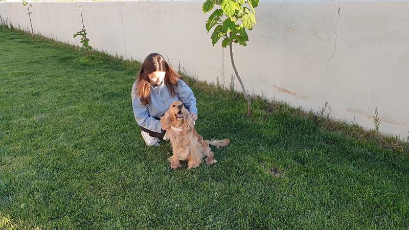 residencia perros toledo
